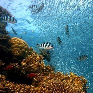 海 有毒 アンモニア