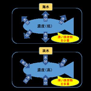 淡水魚と海水魚 浸透圧 図