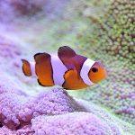 海水魚飼育