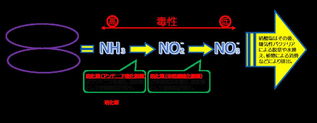 アンモニア 亜硝酸塩 硝酸塩 脱窒