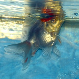 酸欠 熱帯魚 水槽