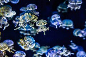 クラゲ 体 構造 生態 魅力