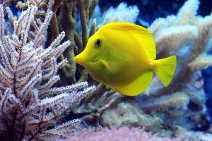 海水魚 草食性 植物食性
