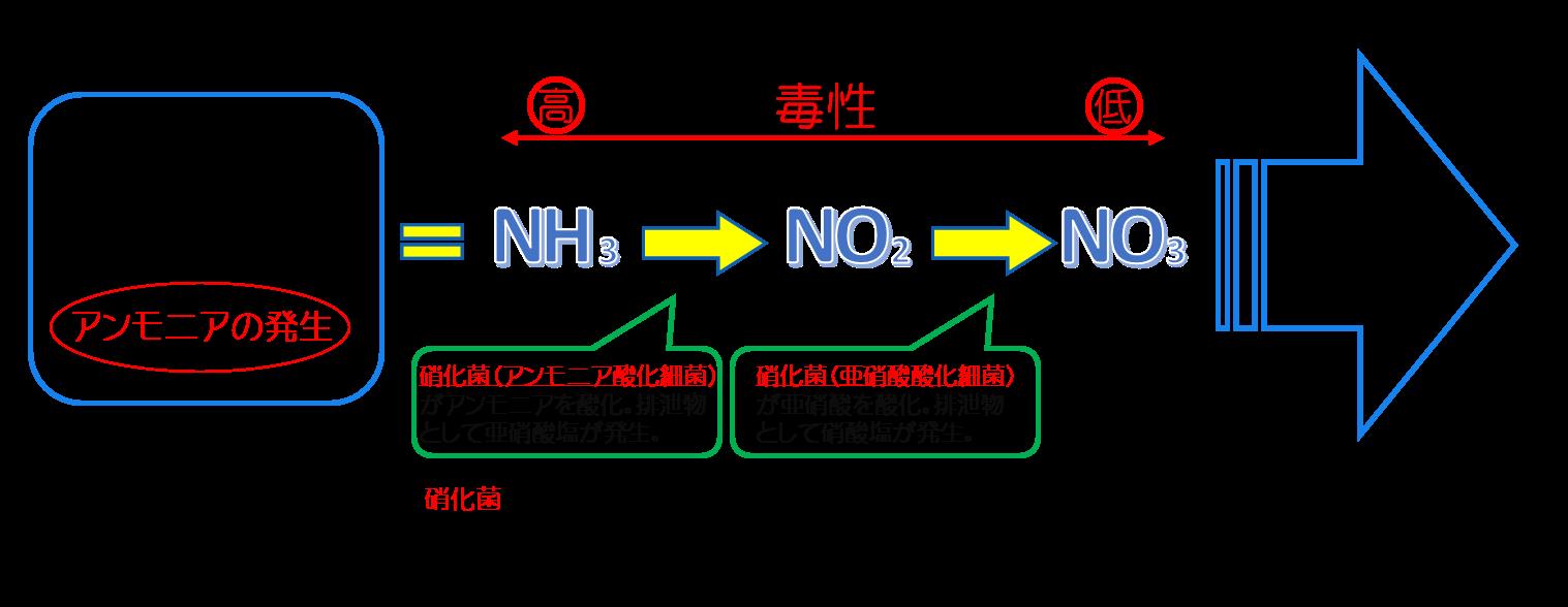 アクアリウム 水槽 硝化 硝化作用